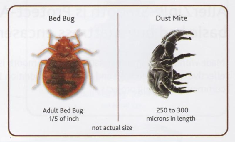 Bugland Pest Management Inc Bed Bugs